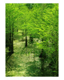 Forest So Green Photographic Print by Florene Welebny