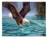 Eagle Fishing Giclee Print by Mike Walsh