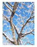 Icey Bark Photographic Print by Shannon Jones