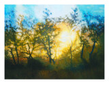 Sunset Through Central Coast Oaks Giclee Print by Dan Berkeland