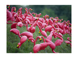 Flamingos Photographic Print by John Gusky
