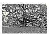 Angel Oak Tree Photographic Print by James Sukkert