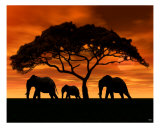 Elephant Sunset Photographic Print by Walter Colvin