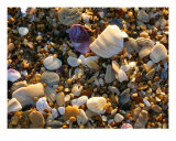 The Sand Beneath Your Feet Photographic Print by Holly Smith