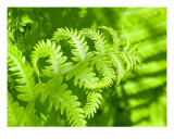 Fern Fantasy Photographic Print by Mary Lane