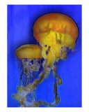 Jelly Duo Photographic Print by Laurent Nicolov