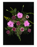 Impatient Dianthus Flower Arrangement Photographic Print by Lorraine Giasson