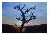 Grand Canyon Sunset Giclee Print by Barry Magyaros
