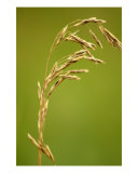 Graphic Wheat Photographic Print by Debbie Vinci
