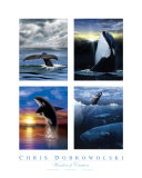 Wonders Of Creation - Whales I Photographic Print by Chris Dobrowolski
