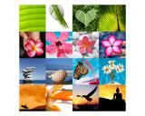 Colourful Collage of Tropical Images Photographic Print by Alex Bramwell