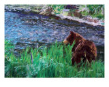 070709 Black Bear Alaska Giclee Print by Garland Oldham