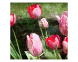 Arrival Of Spring Tulips Giclee Print by Francisco Valente