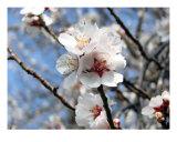 Frühlingsblüte II Fotografie-Druck von Francisco Valente