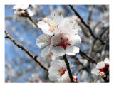 Spring Blossom II Photographic Print by Francisco Valente