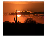 Saguaro Sunset Photographie par Eric Joyce