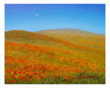 California Poppies Giclee Print by Jerome Stumphauzer