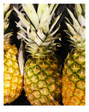 Pineapple Perch Photographic Print by Florene Welebny
