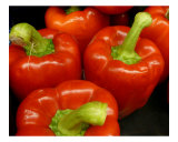 Fiery Red Peppers Photographic Print by Florene Welebny
