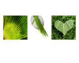 Green Triptych Photographic Print by Alex Bramwell