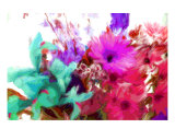 Brilliant Splash Of Color Photographic Print by Susan Lipschutz