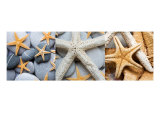 Starfish Triptych Photographic Print by Alex Bramwell