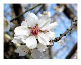 Frühlingsblüte I Fotografie-Druck von Francisco Valente