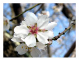 Spring Blossom I Photographic Print by Francisco Valente