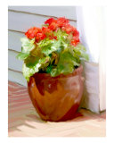 Red Begonias Photographic Print by Susan Lipschutz