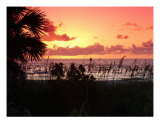 Not Just Another Sunset Photographic Print by Florene Welebny