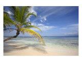 Tropical Paradise Photographic Print by Alex Bramwell