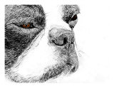 Boston Terrier Sketch Photographic Print by Patti Meador