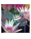 Waterlily Mixed III Giclee Print by Francisco Valente