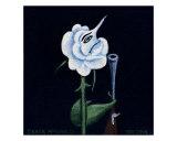 White Rose Giclee Print by Derek Mckindles
