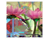Waterlily Mixed II Giclee Print by Francisco Valente