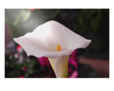 Light Of The Lily Photographic Print by Mandé Peer