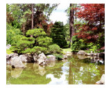 Japanese Garden Pond Photographic Print by Lorrie Morrison