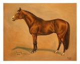 Thoroughbred Horse ,Danzig Giclee Print by Birgit Schnapp