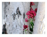 Birch Bark Texture Photographic Print by Lorrie Morrison