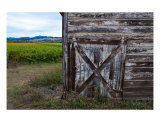 A Russian River Vineyard Photographic Print by Brendan Mcweeney