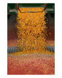 Fall Harvest Photographic Print by Clarence Carvell
