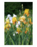 Dreamy Summer Garden Photographic Print by Susan Lipschutz