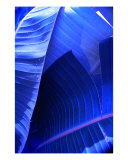 Banana Blue Photographic Print by Florene Welebny