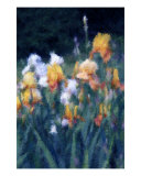 Painted Iris Photographic Print by Susan Lipschutz