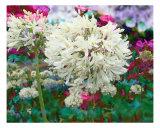 Spring Garden Mix Fotografie-Druck von Francisco Valente