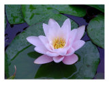 Water Lily Photographic Print by Jeri Oliver