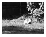 Worn Soccer Ball Photographic Print by Nathaniel Copeland