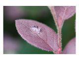 Dew Drop Reflections Photographic Print by Kareyanne Hawkinson