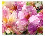 Spring Mix Fotografie-Druck von Francisco Valente