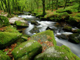 Golitha Falls, Bodmin, Cornwall, UK Photographic Print by Ross Hoddinott